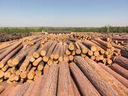 Наша компания экспортирует собственный лес и лесоматериалы с Украины.