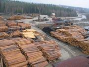Предлагает к продаже лес - кругляк из России регионов Сибири.....